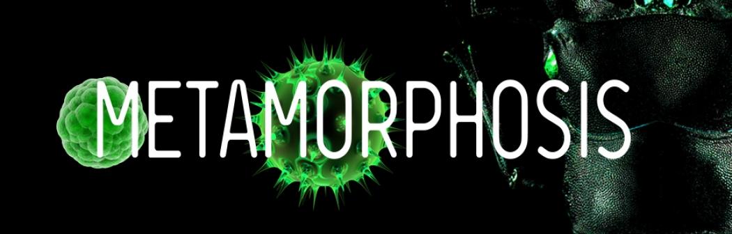 str063_2019_metamorphosis_953x303-2.jpg